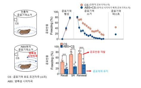 그림1 양측성 시각자극을 사용한 공포기억 반응 감소 효과