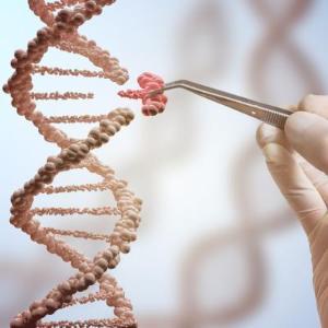 유전자 가위 이용해 핵산 증폭, 돌연변이 찾아낸다