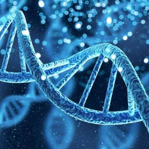 전립선암 조절 핵심 유전자 발견하다